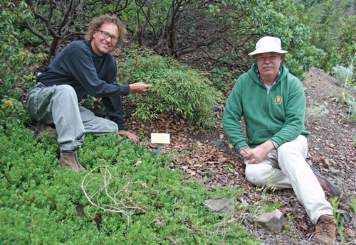 Dave Mrus (L) with mentor Bert Johnson (R) examining a rare specimen of cut-leaf chinquapin at the RPBG.