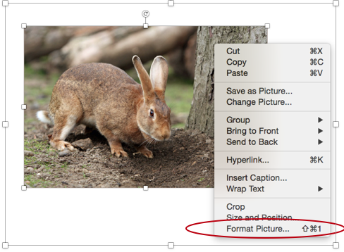 Format picture button